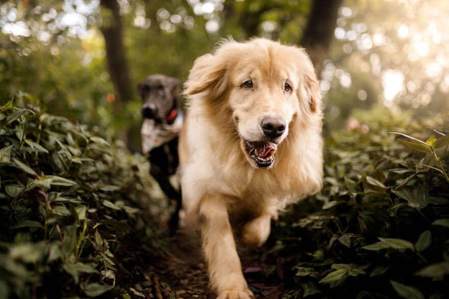 seven dog groups