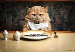 eating cat 1