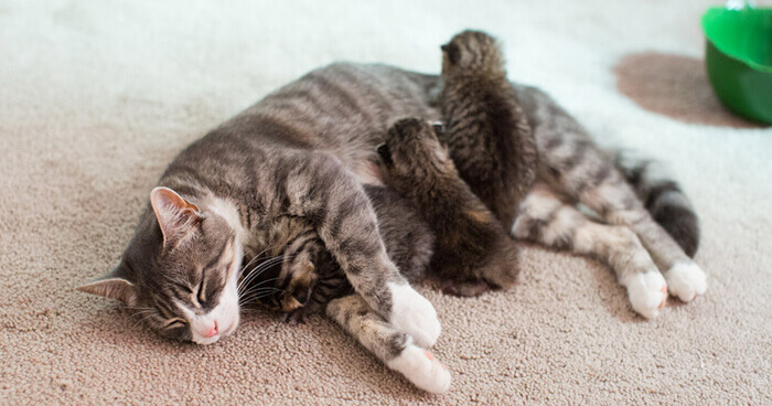 cats in heat 1