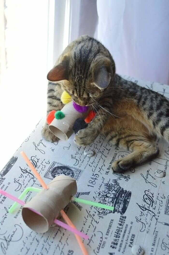 make cat toys out of cardboard roll - 1