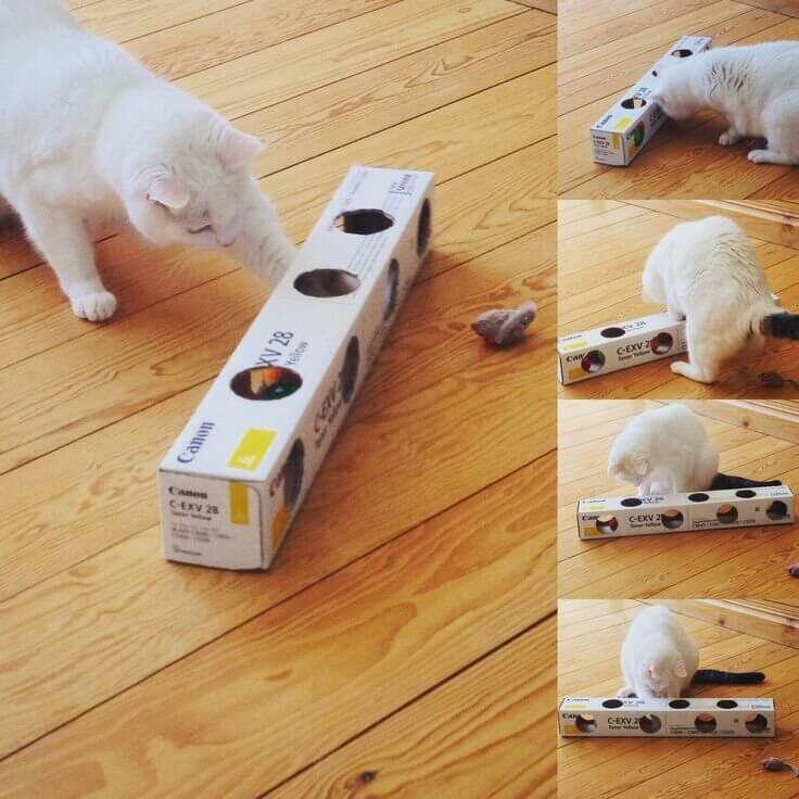 make cat toys out of carton packaging 1