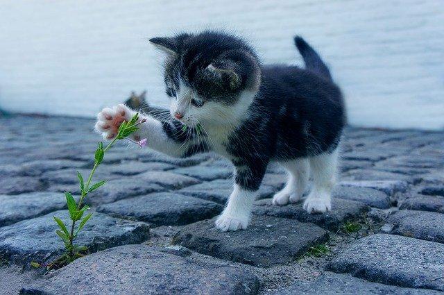 kitten with flower