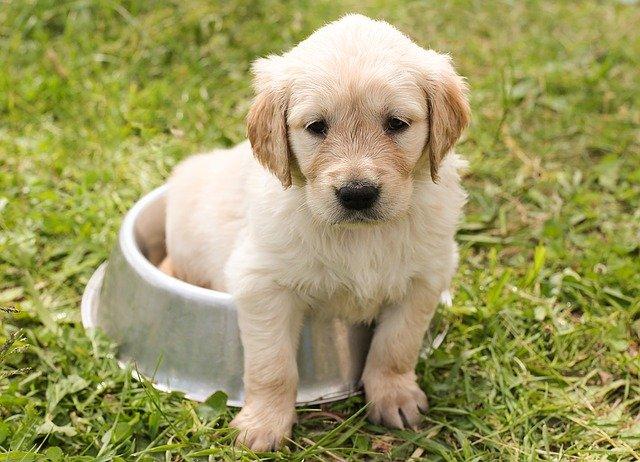 puppy sitting on food